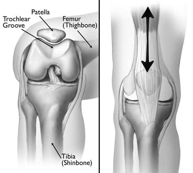 Knee and kneecap