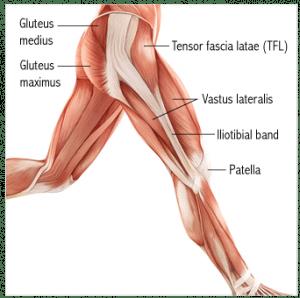 Key running muscles